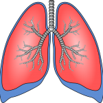 lungs-154282_1280
